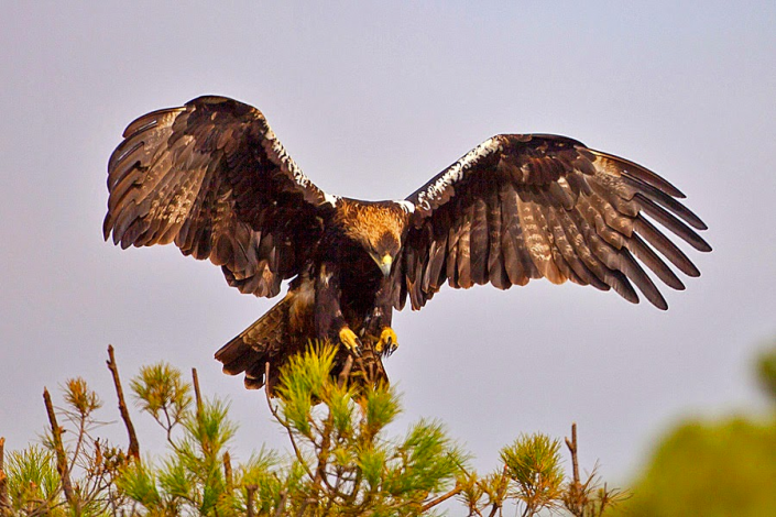Stunning wild life experience during your holiday in Ronda - Andalucia