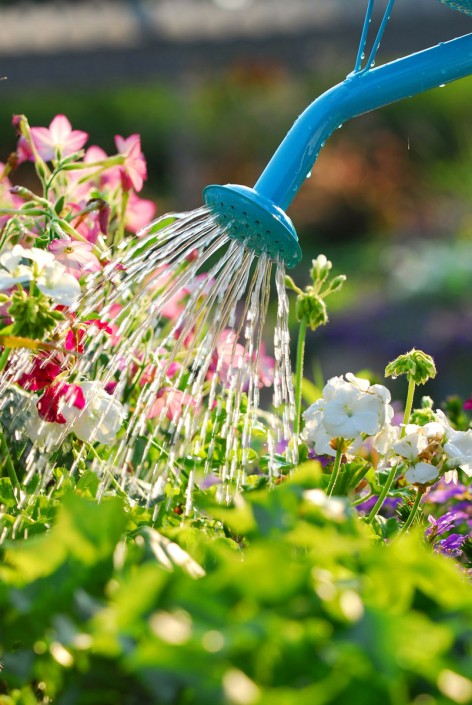 Flowerly garden is taken care of
