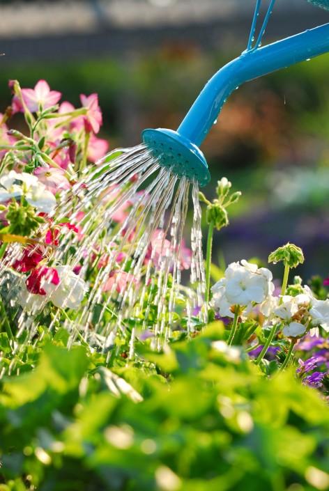 Flowerly garden is taken care of